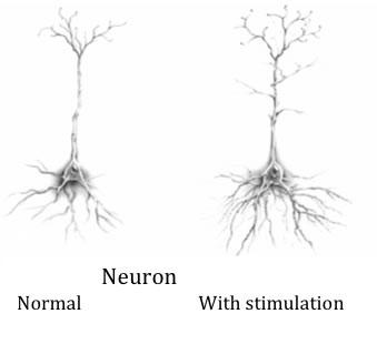 Neuroplastizität bedeutet die Fähigkeit des Gehirns Punkte zu verbinden, zu stärken