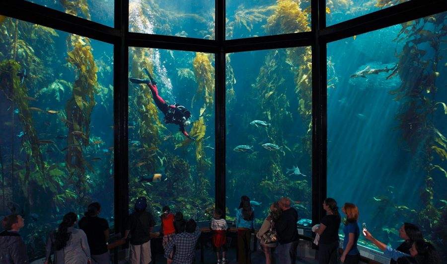 How the Monterey Bay Aquarium Uses Wrike to Support The Expansion of Education Programs