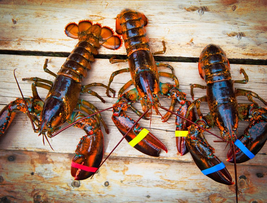 Creative Agencies, Want to Win & Keep Clients? Be the Lobster