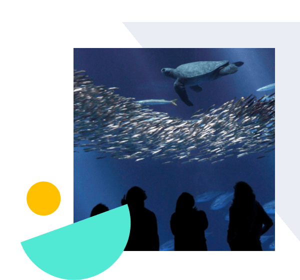 How the Monterey Bay Aquarium Enhanced Collaboration While Doubling Their Education Programs